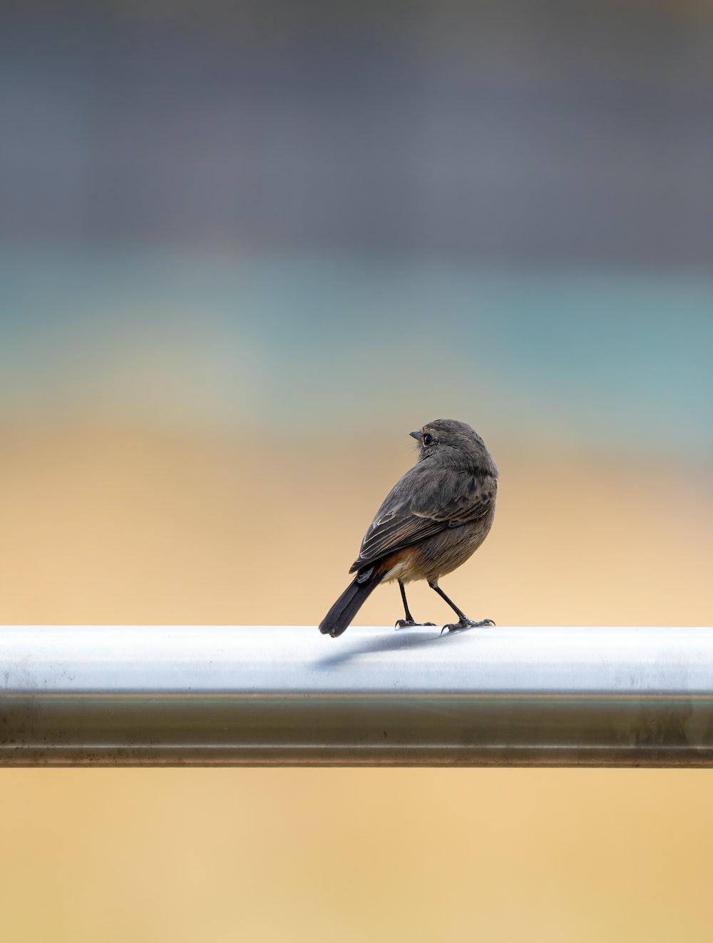 brown bird on white wooden fence