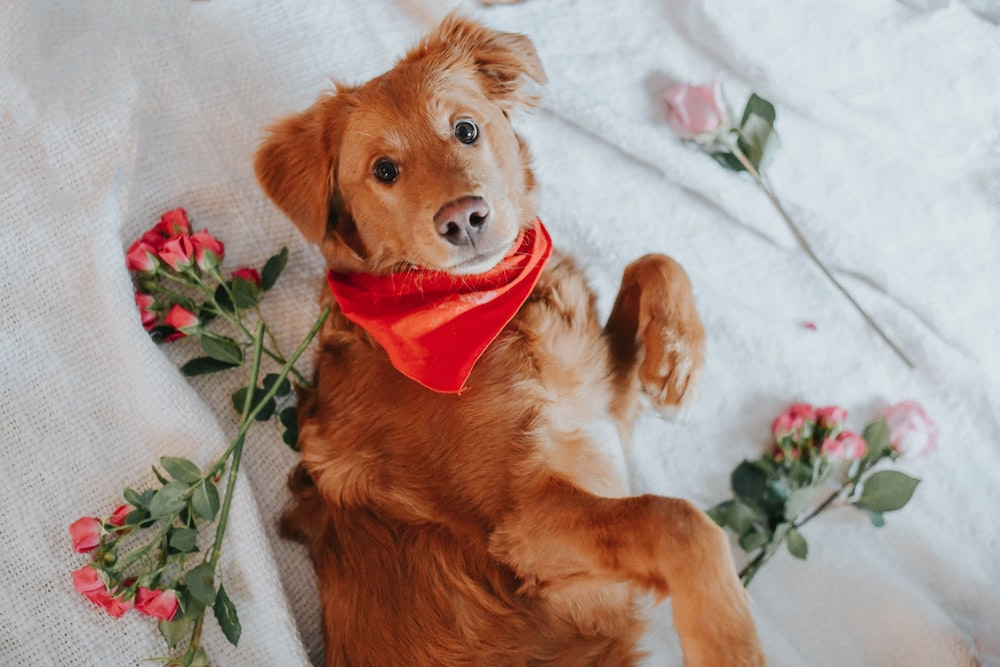 golden retriever puppy lying on white and green floral textile