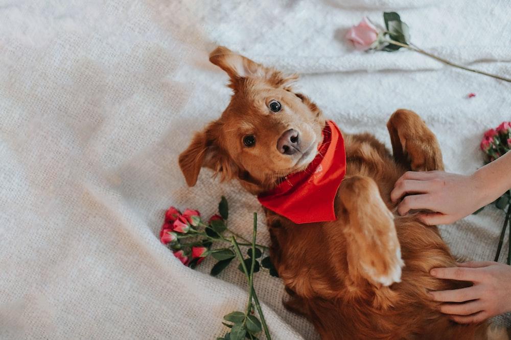 brown dog plush toy on white textile