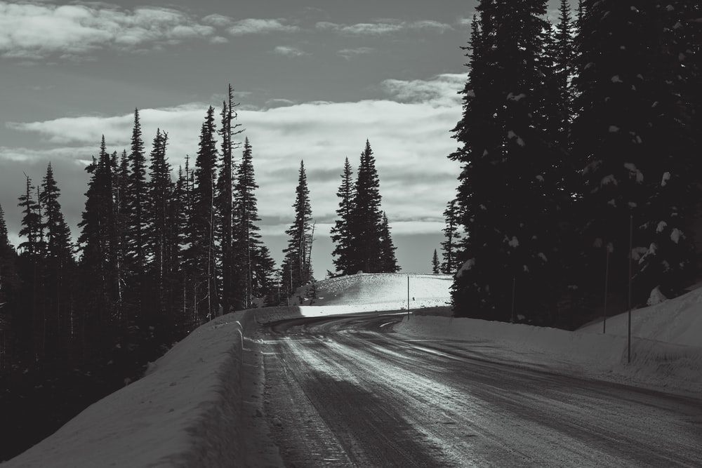 snow covered road between trees under cloudy sky during daytime