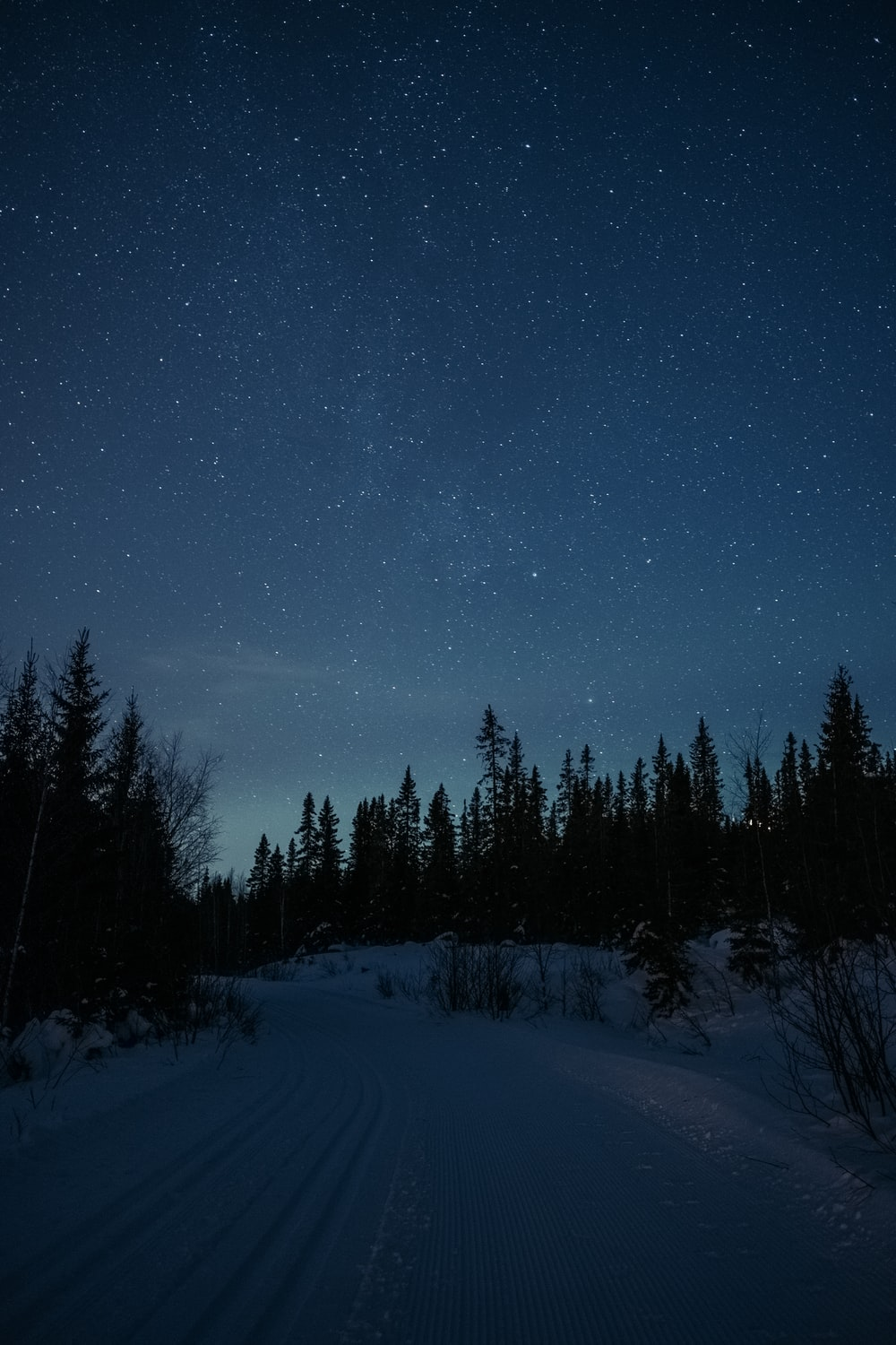 snow covered field and trees under starry night