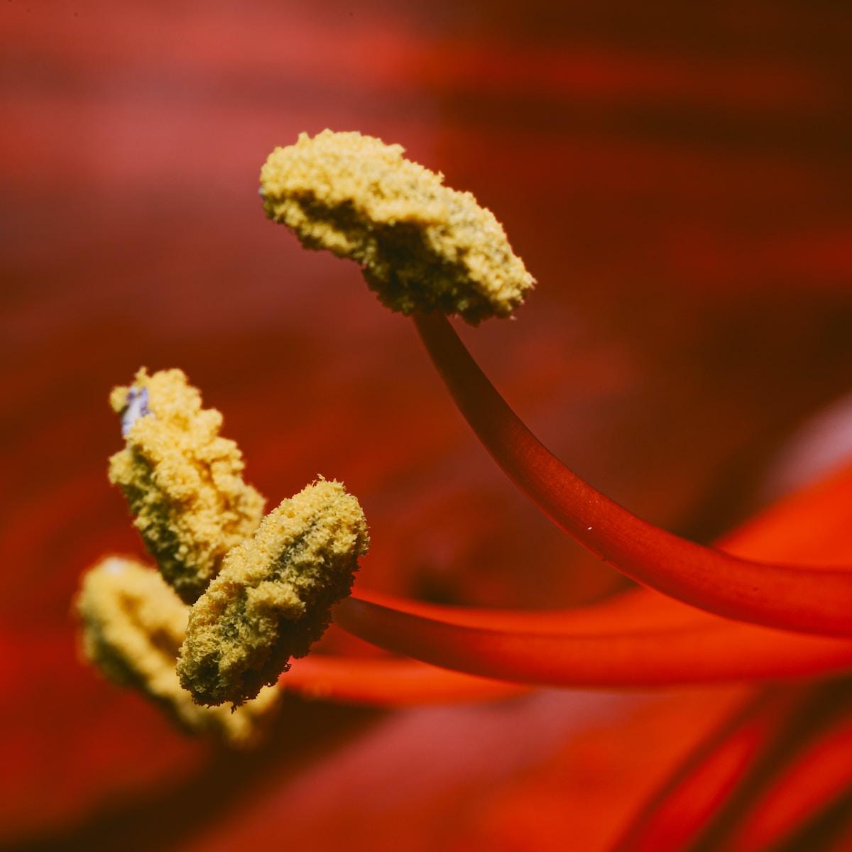 dolor de vejiga crónico, brown plant in macro lens