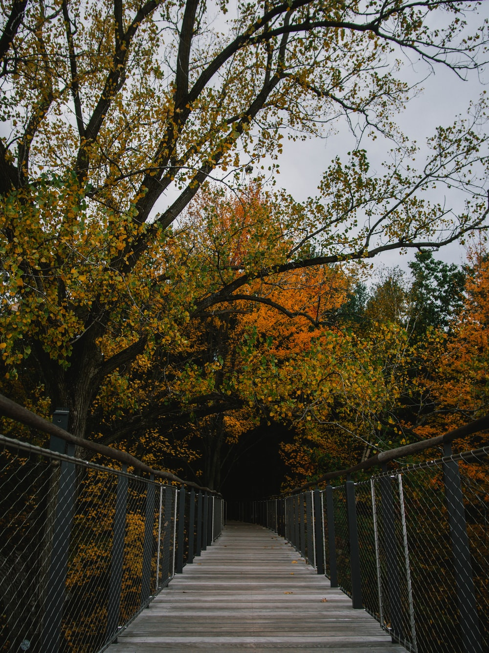 brown trees on gray concrete pathway