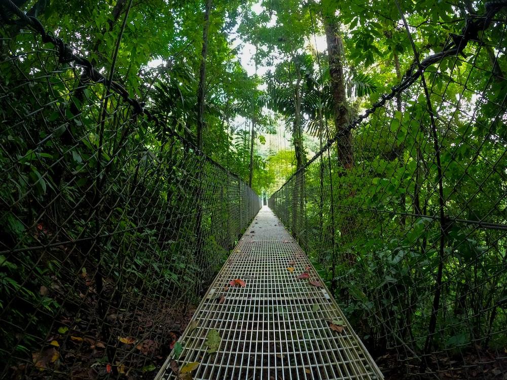 black metal mesh fence near green trees during daytime