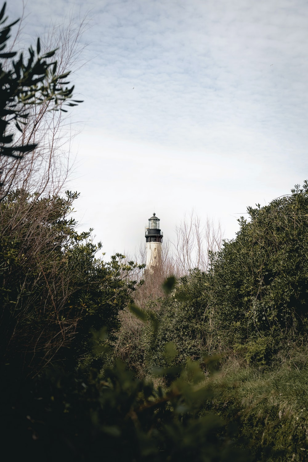 white lighthouse surrounded by green trees under white sky during daytime