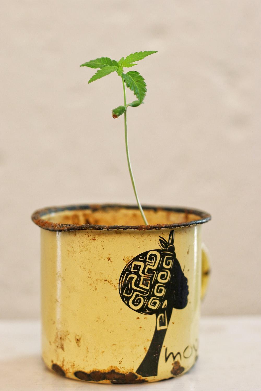 yellow and black ceramic mug with green plant