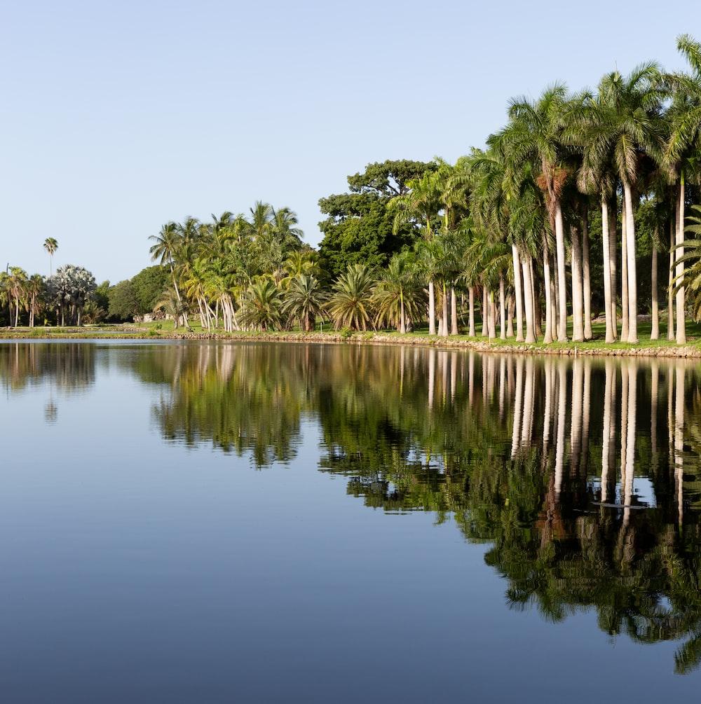 green trees beside lake under blue sky during daytime