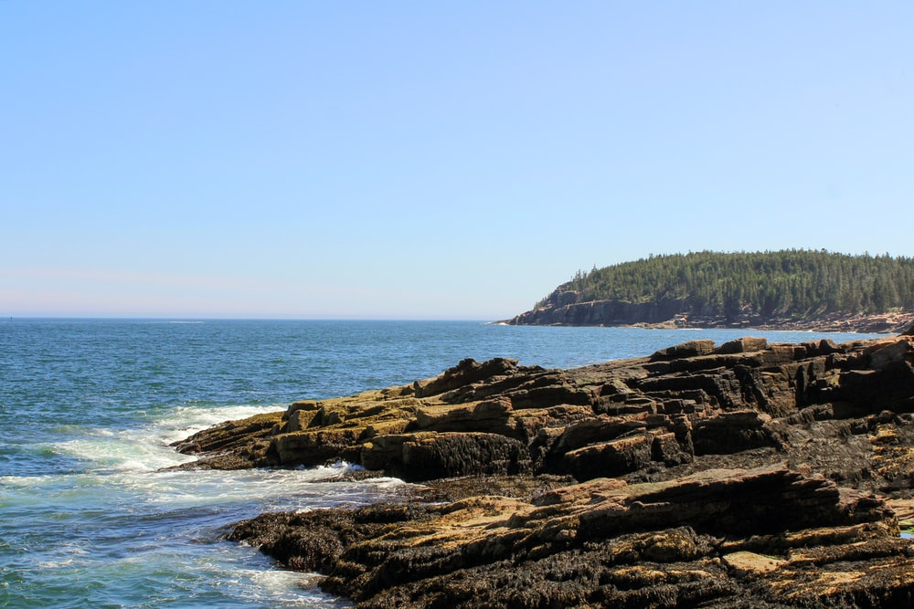 brown rocky shore near green trees during daytime