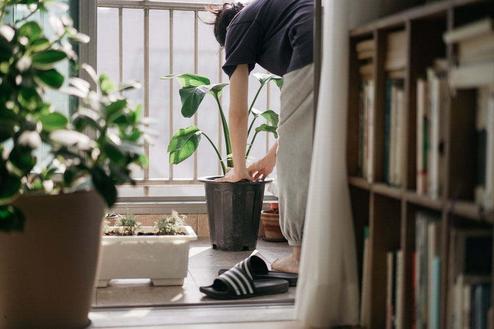 person in blue shirt and black pants standing beside green potted plant