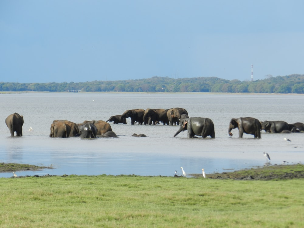 herd of elephants on green grass field during daytime