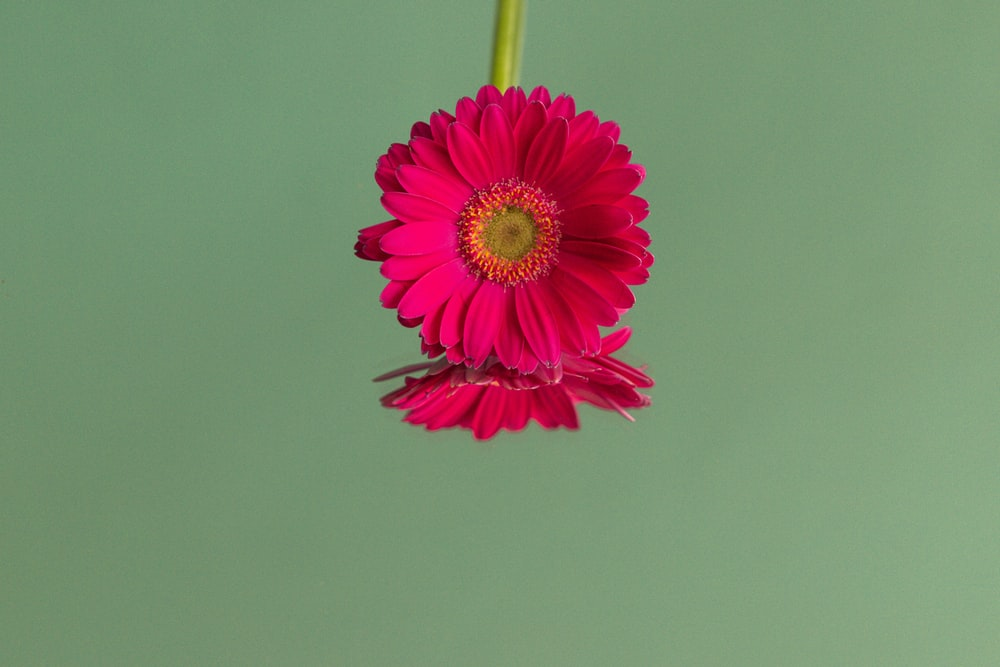 pink flower with green stem