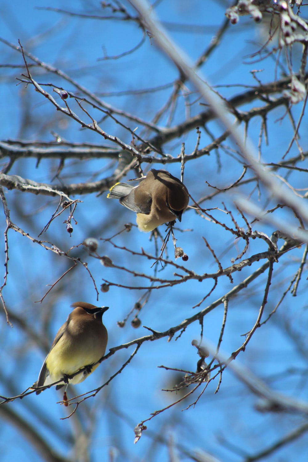 white and brown bird on bare tree during daytime