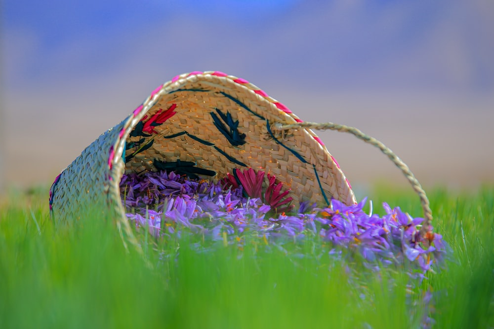 brown and blue hat on purple flower field during daytime