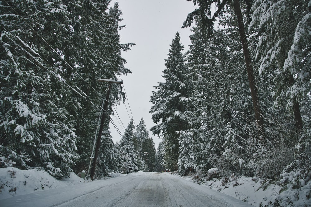 snow covered road between green trees during daytime