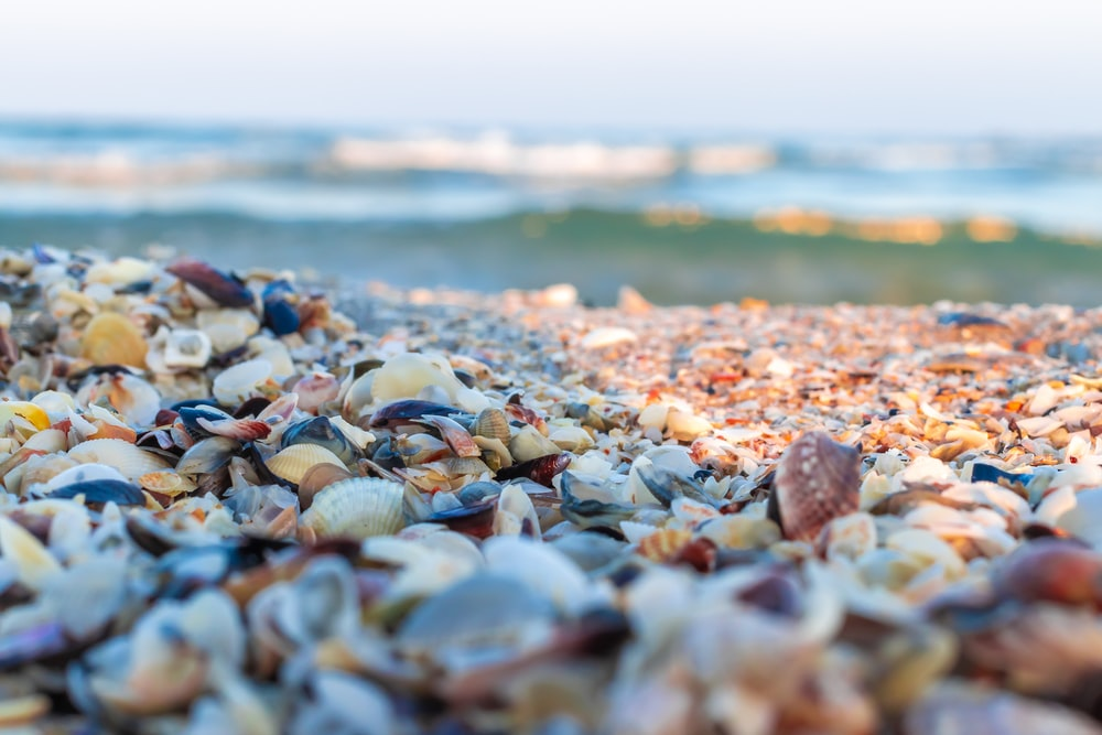 brown and white sea shells on the shore during daytime