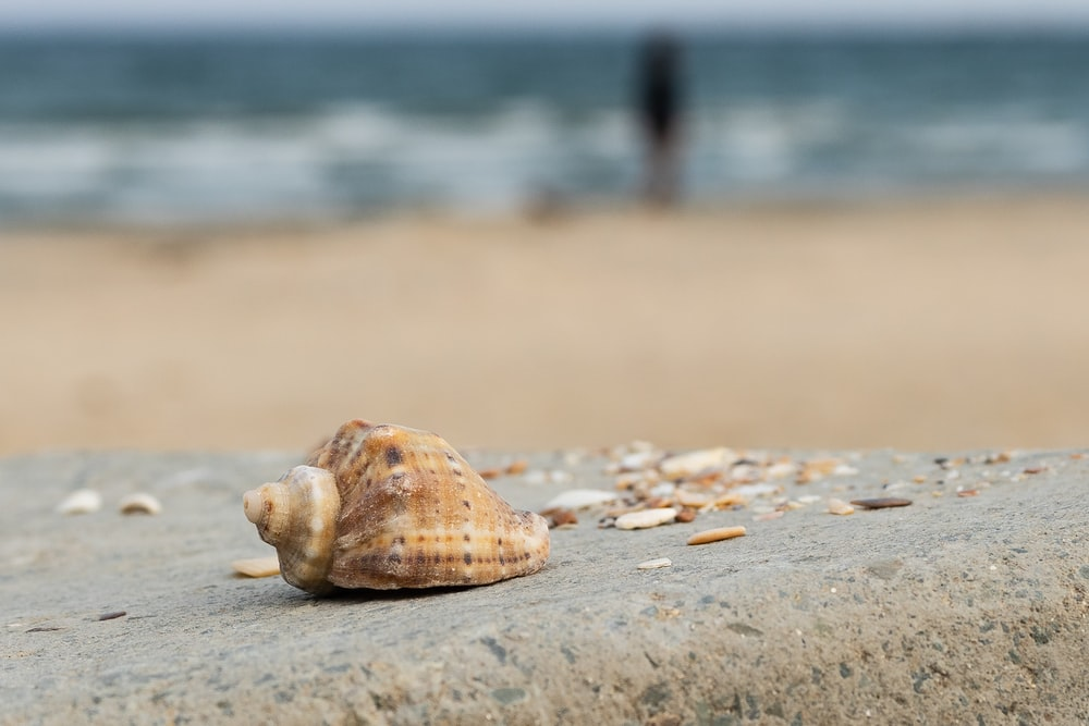 white and brown seashell on brown sand during daytime