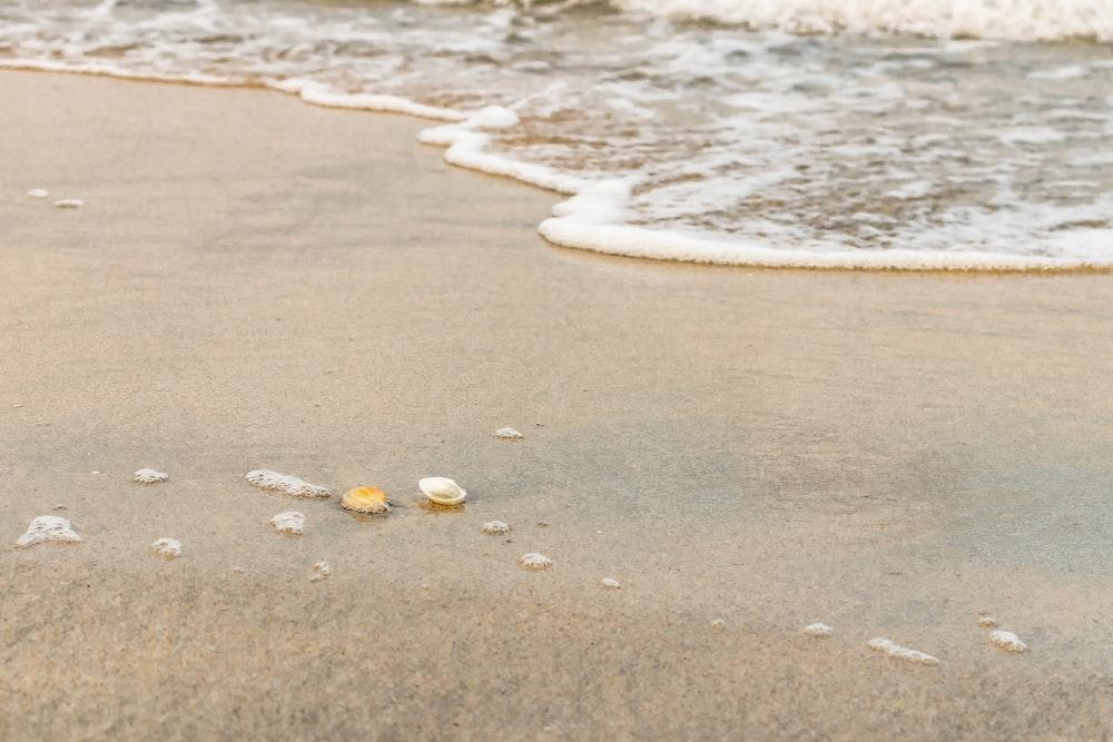 white and yellow seashells on beach shore during daytime