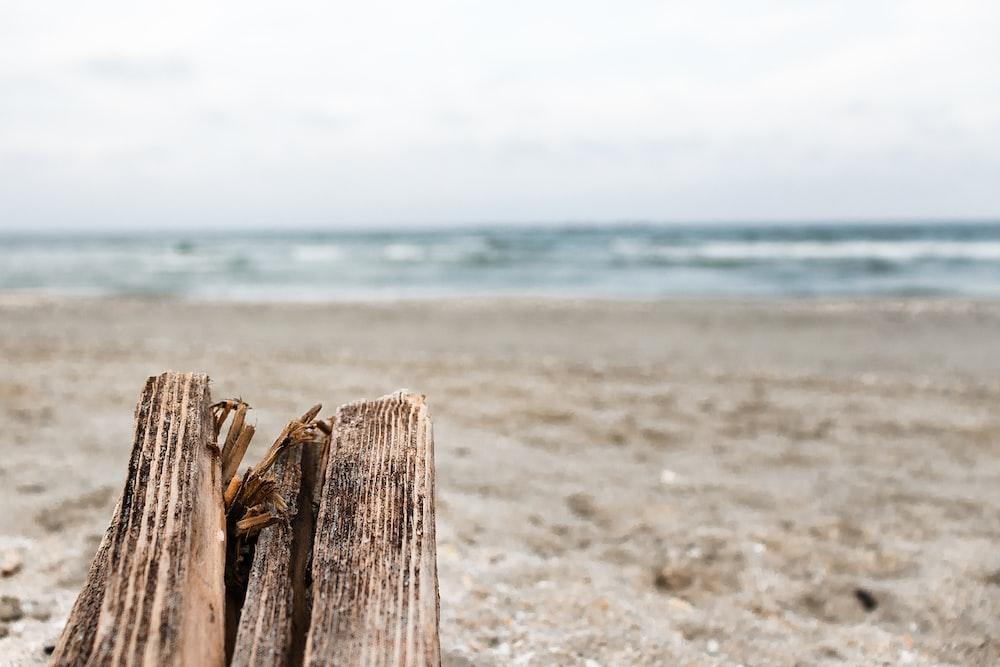 brown wood log on beach shore during daytime