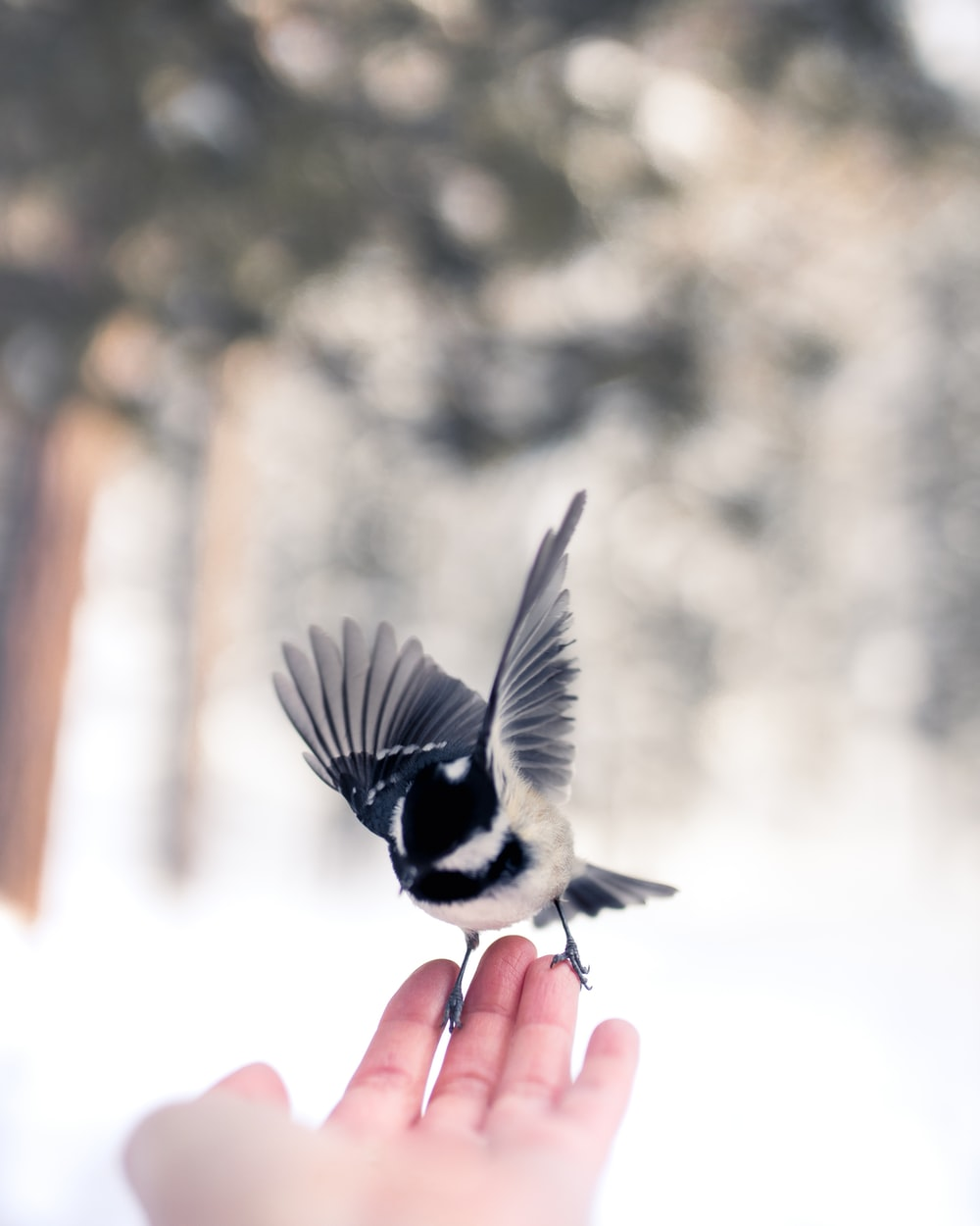 black and white bird on persons hand