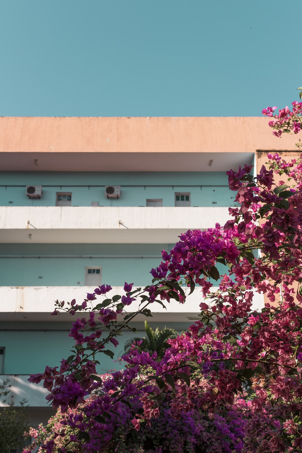 pink flowers on white concrete building