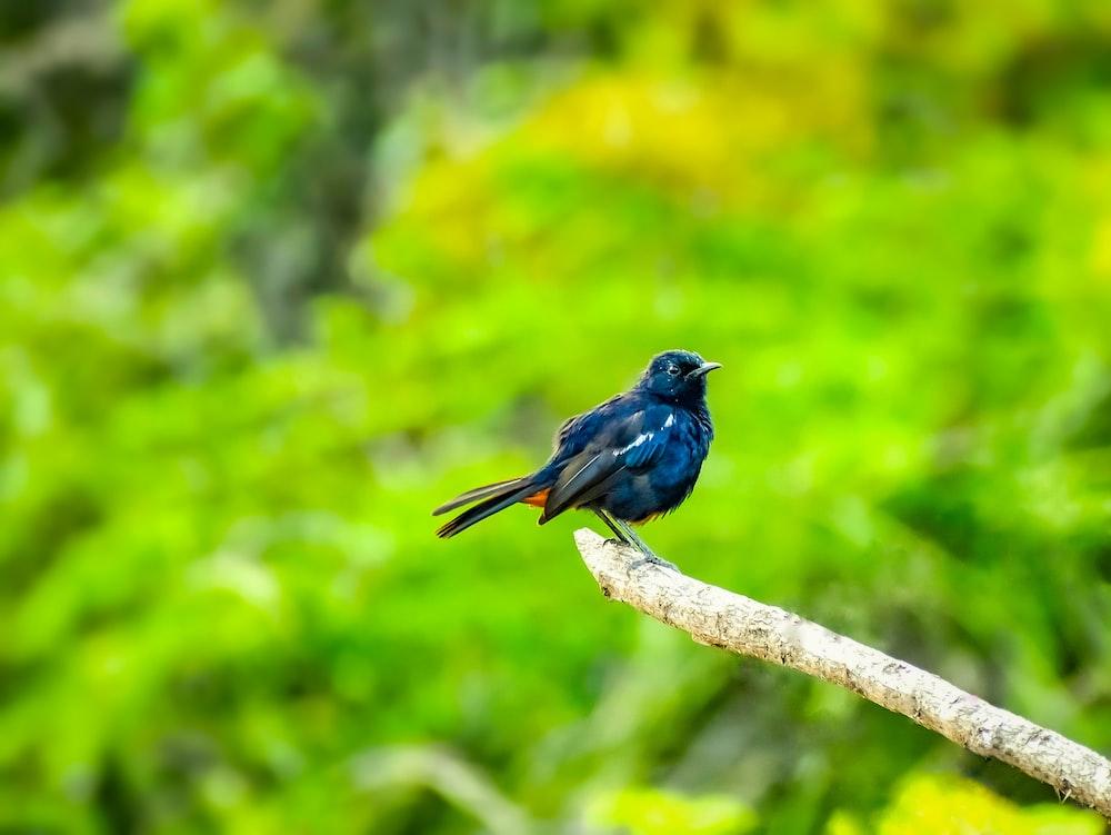 blue bird on brown tree branch during daytime