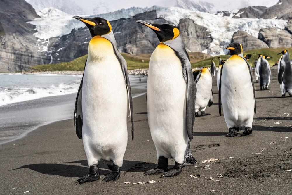penguins on gray concrete pavement during daytime