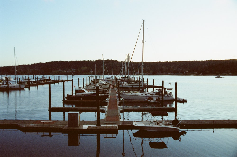 white and black boats on dock during daytime