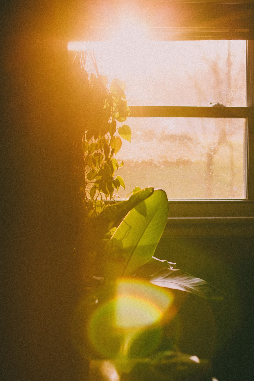 yellow flower near white window