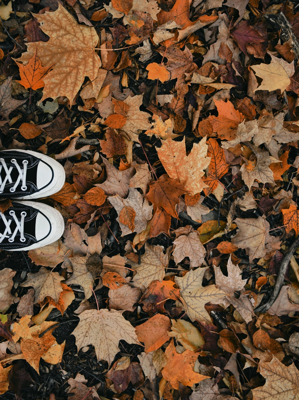 person wearing black and white sneakers standing on dried leaves