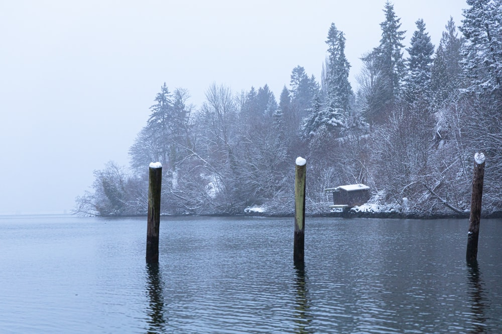 snow covered trees and body of water during daytime