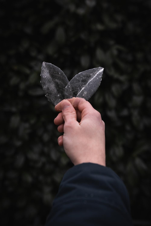 person holding black leaf during daytime