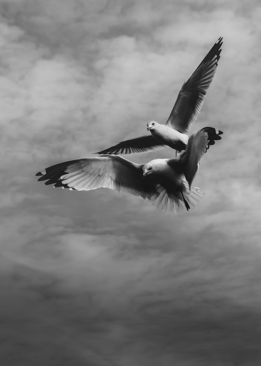 grayscale photo of two birds flying