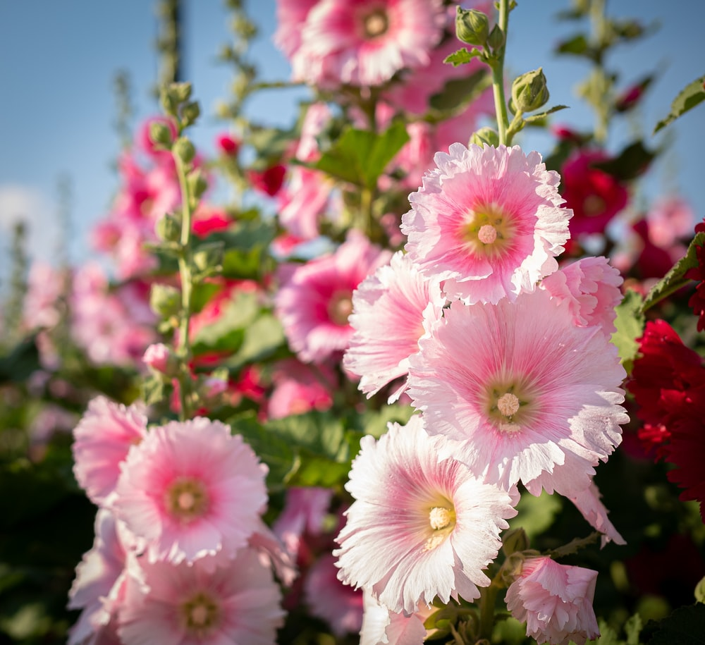 pink and white flowers during daytime