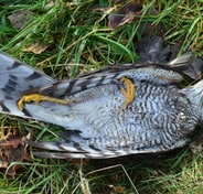 grey and yellow bird on green grass