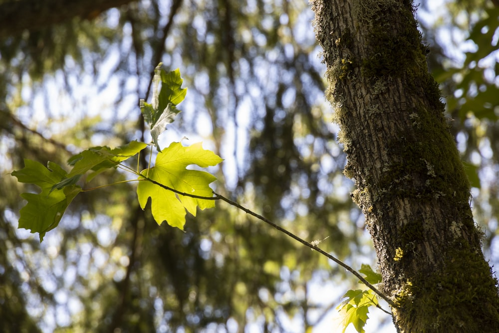 yellow flower on brown tree