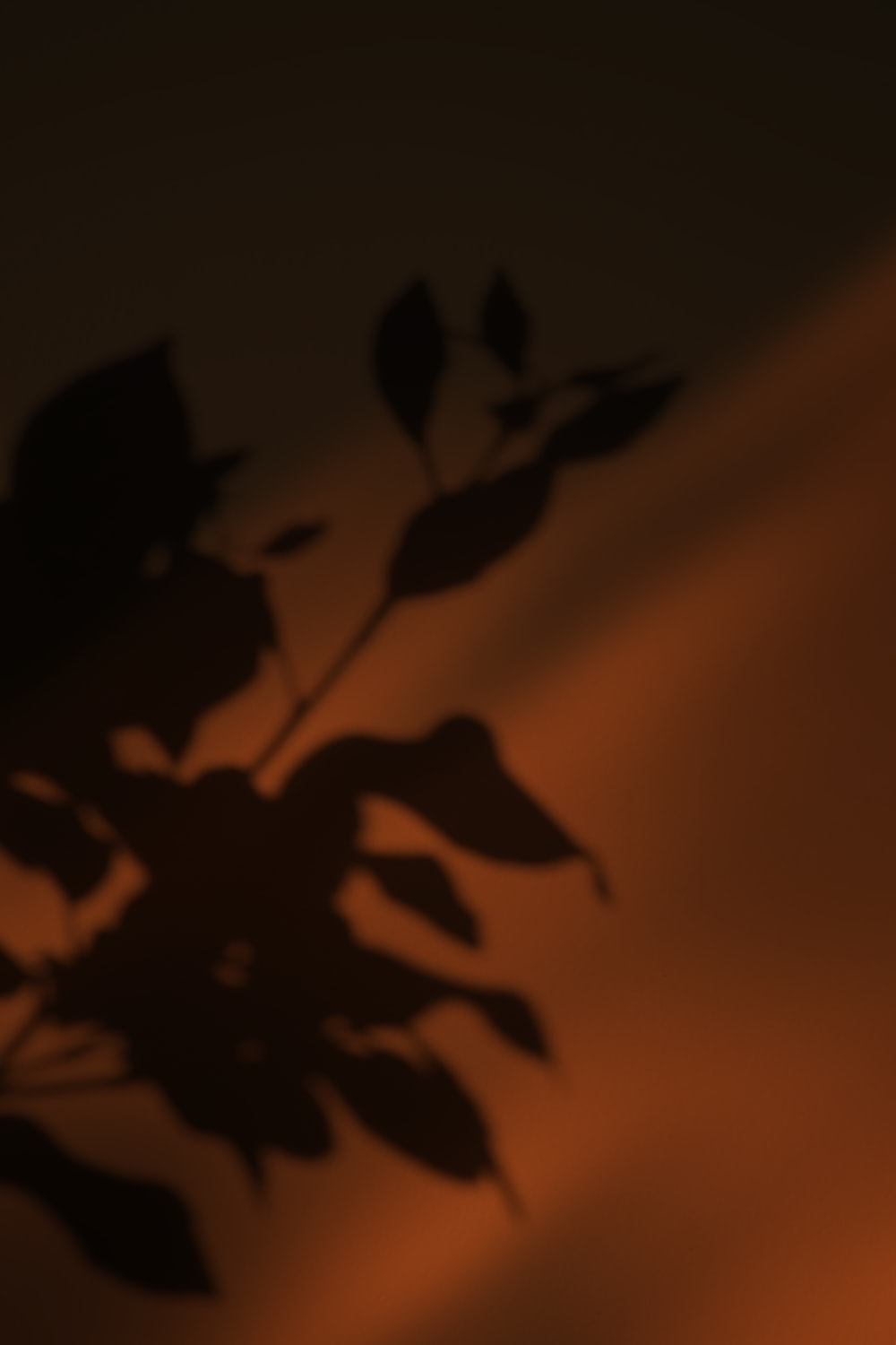 silhouette of flower during sunset
