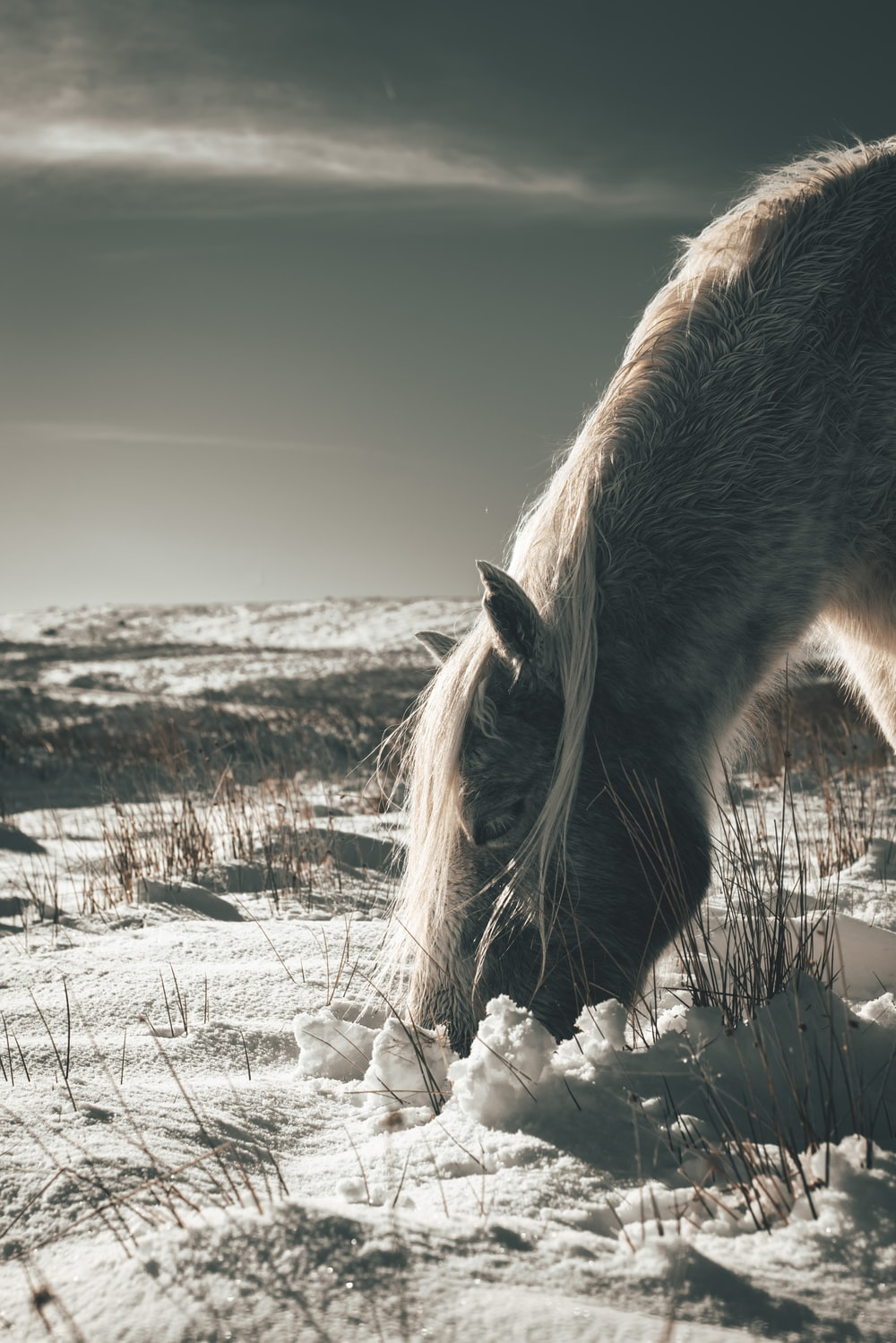 brown horse on snow covered field during daytime