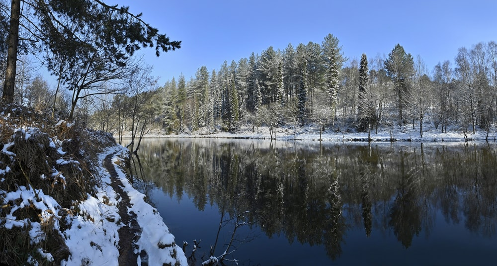 snow covered trees beside lake under blue sky during daytime