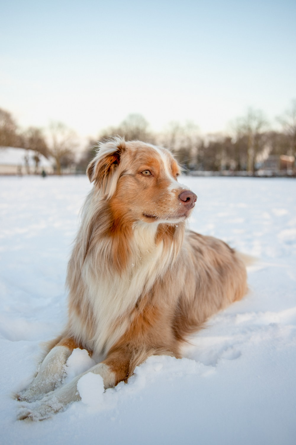 brown and white long coat medium dog on snow covered ground during daytime