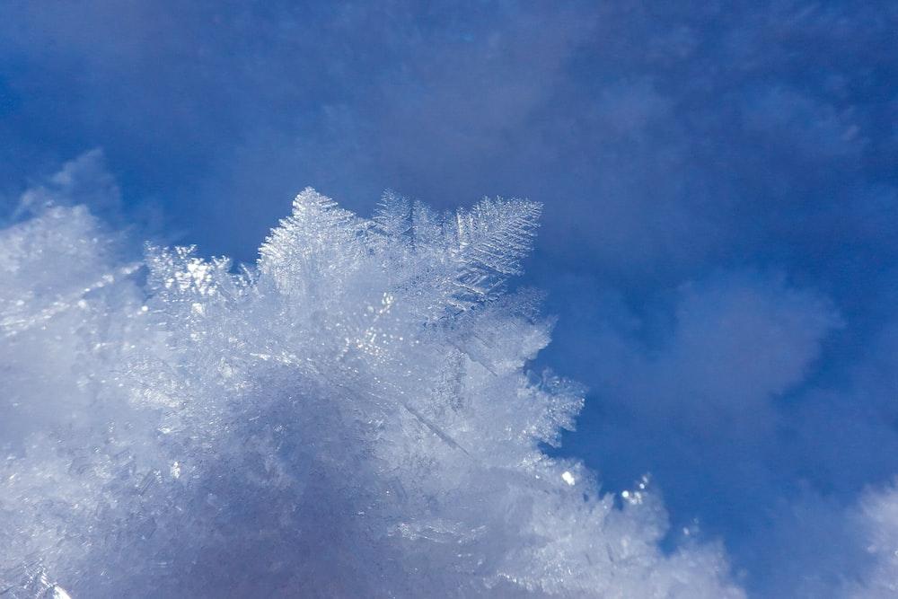 white snow covered tree under blue sky