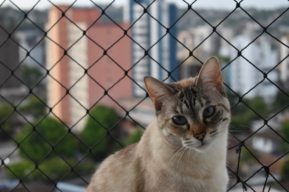 brown and white cat on black metal fence