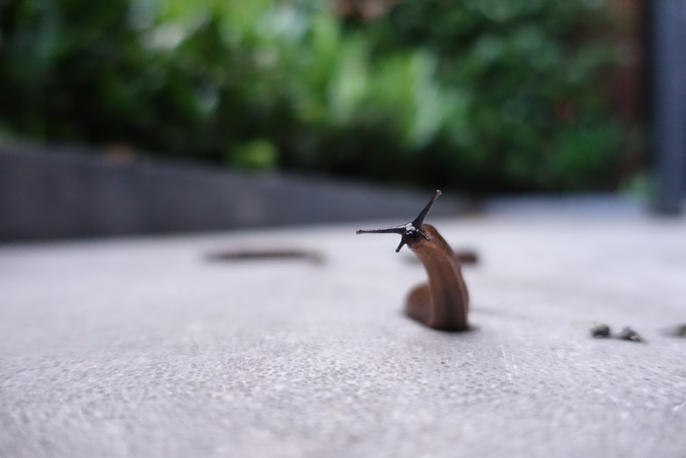 brown snail on gray concrete road during daytime