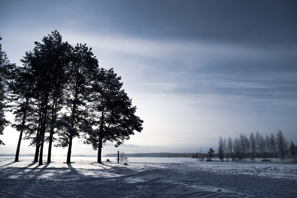 green trees on snow covered ground during daytime