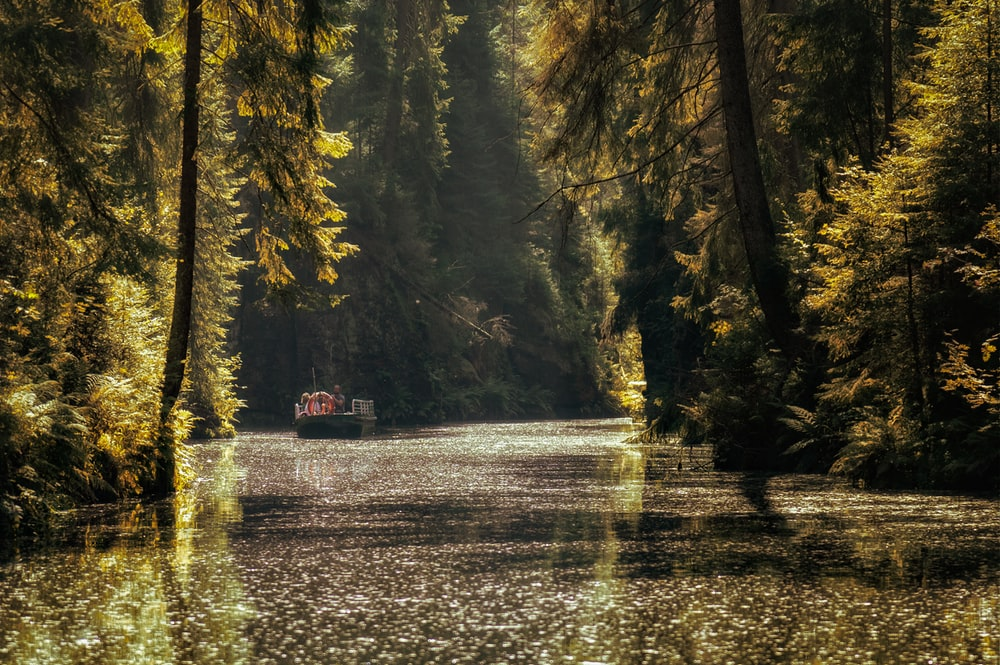 red boat on river between trees during daytime