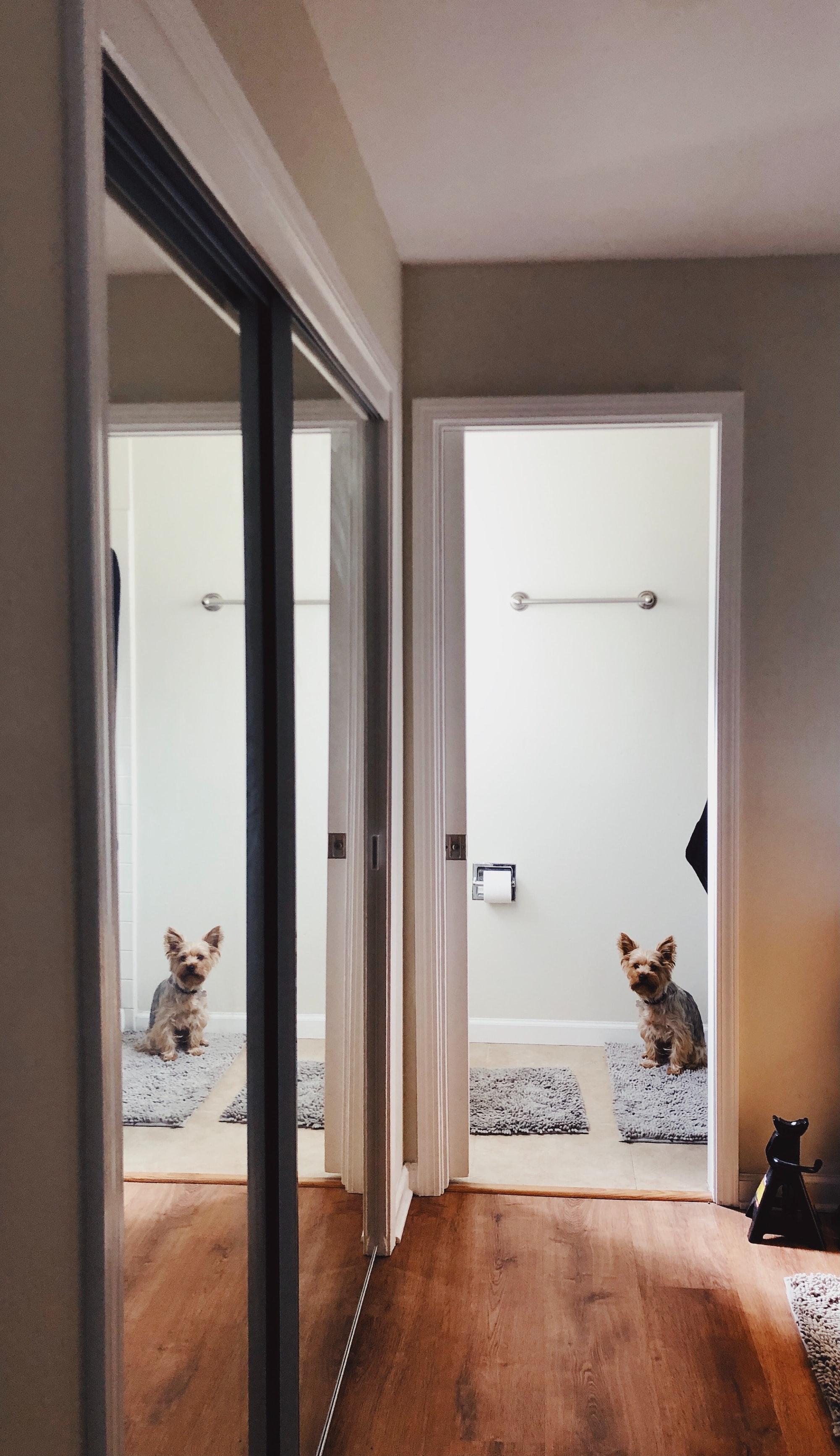 Why Your Dog Follows You Into The Bathroom: Behavior Explained
