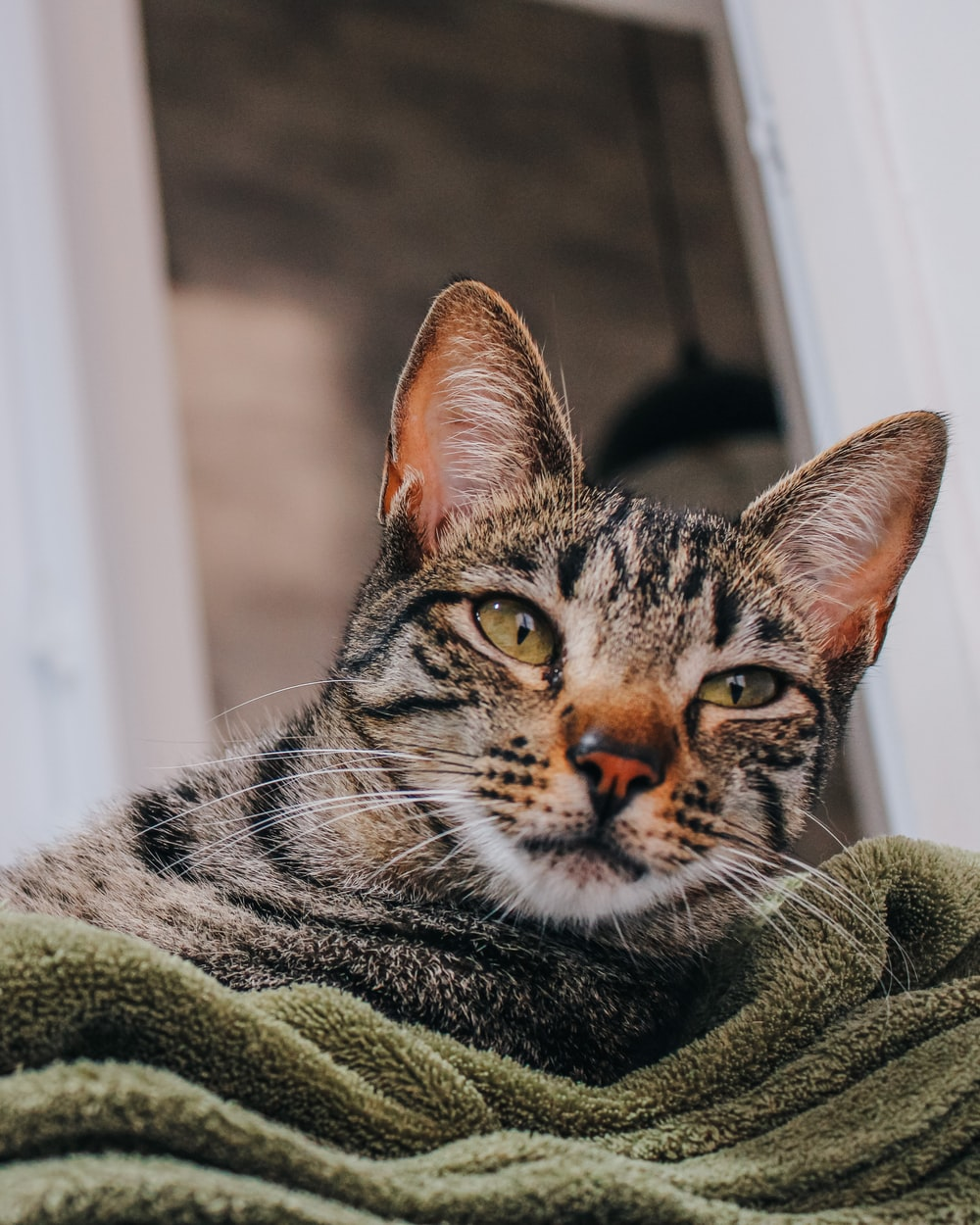 brown tabby cat on green textile