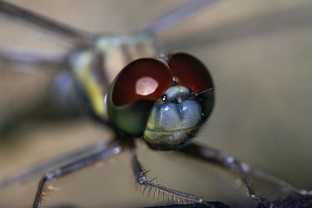 green and brown dragonfly in close up photography