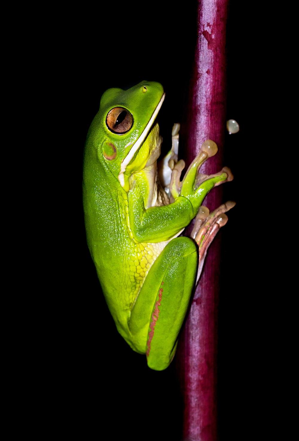 green frog on red stem