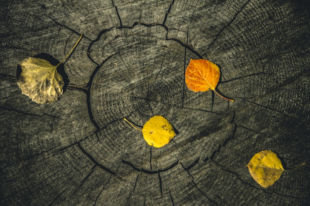 yellow leaf on gray wooden surface