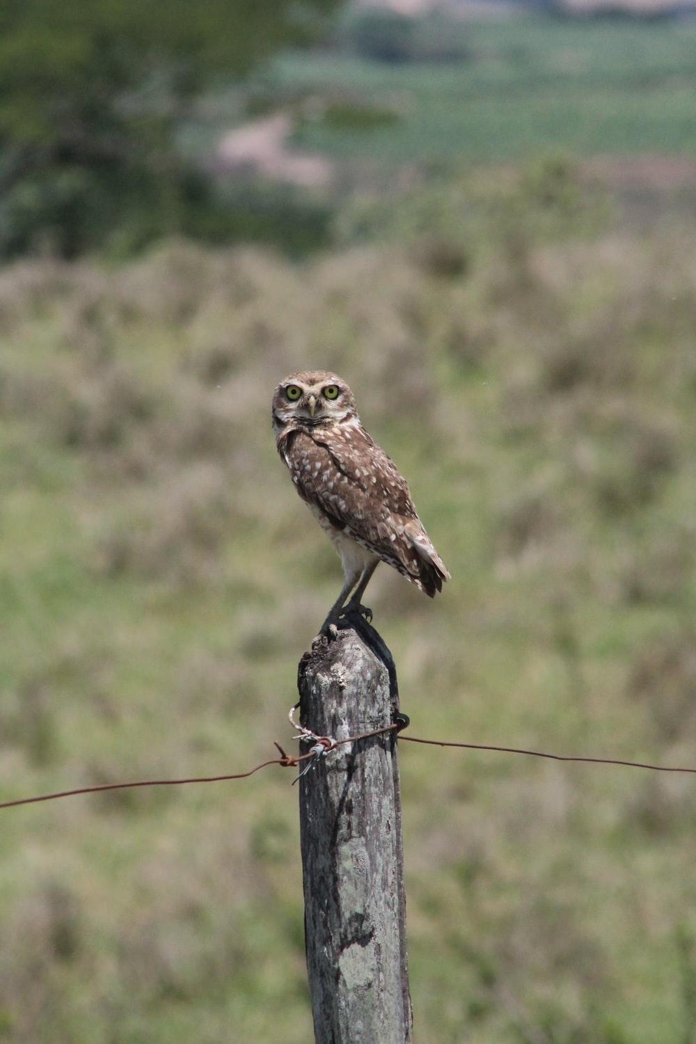 brown owl perched on brown wooden post during daytime